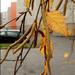 Lakótelepi ősz