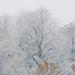 Téli látvány ablakomból