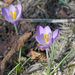 Tavasz van, tavasz van jaj de szép tavasz van...