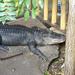 Bp- állatkert - kroki1