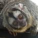 Bp- állatkert - majmocska