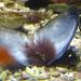 Bp- állatkert - kagyló 1
