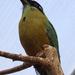 Bp- állatkert - --madár 1