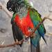 Bp- állatkert - papagáj 1