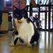 Nagyatád - 63 - Lajos, a szálló macskája