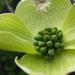 Virágos som