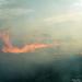 2010 03 21 Leégett a legelő Egyházasharasztinál 4