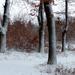 11 Hahó! Itt a hó