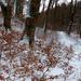 03 Téli erdő