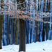 11 Kékes árnyalat az árnyékos erdőben
