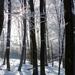 15 Napsütés az erdőben
