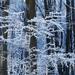 16 Árnyék az erdőben