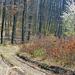 06 Vad gyömölcsfa