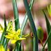 05 Tavasz hírnök