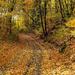Őszi erdei út