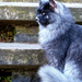 Szépséges macska