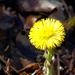 012 Egy szál martilapú virág