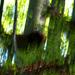 03 Rejtőzködő szarvastehenek