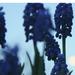 Április esti kék