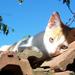 Album - Tomi macsek - sorozat