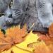 Photo 2013.10.14. 13 14 54