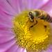 Méhek színek - 2