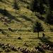 a pásztor