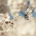 tavaszi természet II