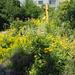 Brno, Otevřená zahrada (közösségi kert), SzG3