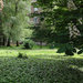 Egyetem kert