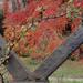 Album - Gellért - hegyi ősz