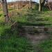 Vadregényes lépcsők.. (csak egy kicsit életveszélyes...)