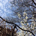 2017.03.22.Gellért hegyi tavasz