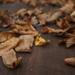 Őszi falevelek