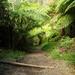 Album - Melbourne Dandenongs