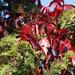 Őszi színek (2)