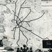 Gyorsvasúti vonalhálózati térkép