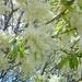 virágpompában (3)