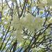 virágpompában (2)