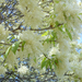virágpompában (1)