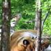 a tigris pihenője 2