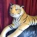 a tigris pihenője 3 :)