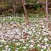 ezüstös levelek