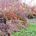 őszi színek novemberben