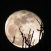 esti felkelő hold