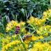 méhecske és bodobács