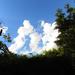 felhő család