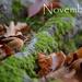 November 2048x1536