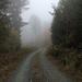 IMG 0071 56-os úttól Ny-ra, ködben