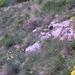 434 Tavaszi virágok a vár sziklás oldalában